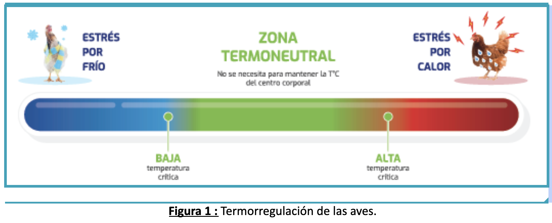 Zona termoneutral.png